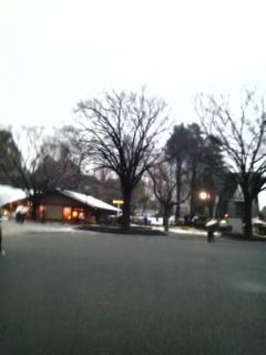 雪の上野公園